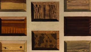 Icones lignorum exoticorum et nostratium de Sepp et Houttuyn