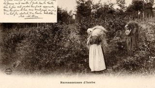 24 – The Forest in Nivernais – Grass collectors