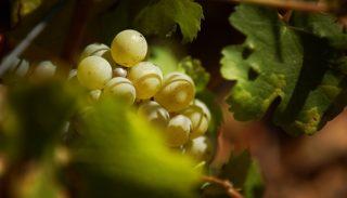 Les vignobles nivernais – Pouilly-sur-Loire