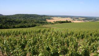 Nièvre vineyards – La Charité-sur-Loire