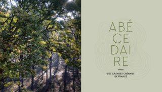 Gazeteer of France's great oak woods – Vibraye, an oak wood of constancy