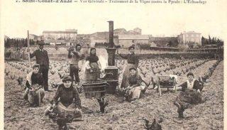 Janvier : Travaux du mois au vignoble