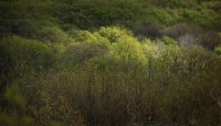 Bois de Couris, Meillant – Uzay-le-Venon (Cher)