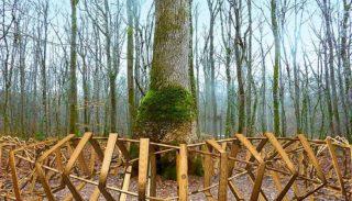 """Tronçais: """"When barrel protects its oak"""""""