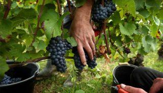 Septembre au vignoble
