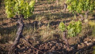 November in the vineyard