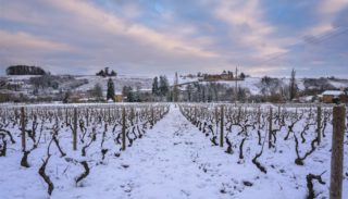 December in the vineyard