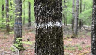 Marquages en forêt