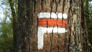 Marquages en forêts : randonnée et cyclisme