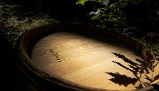 Les essences de bois utilisées en tonnellerie