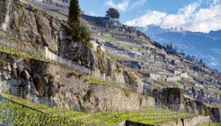 Les terrasses séculaires du vignoble du Lavaux (Suisse)